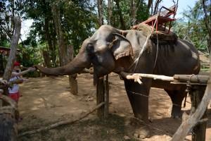 elefant khao sok